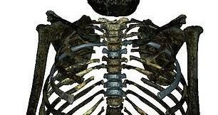 """Kinh ngạc vóc dáng """"nam thần"""" của… loài người tuyệt chủng 2 triệu tuổi"""