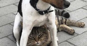 21 bức ảnh đẹp về loài chó giúp bạn cải thiện tâm trạng