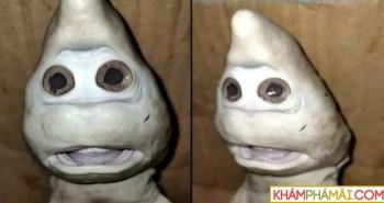 Sửng sốt phát hiện con cá mập khuôn mặt kỳ lạ khó tin tồn tại trên đời