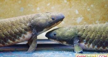Giải mã cách động vật cổ đại chuyển đổi từ sống dưới nước sang trên cạn