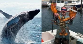 Ngư dân bị cá voi nuốt chửng rồi nhổ ra ly kỳ sau 40 giây