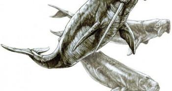 Odobenocetops: Loài cá voi kỳ lạ có cặp ngà bên dài bên ngắn