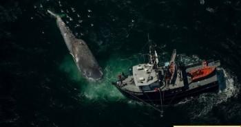 """Santa Barbara - Eo biển """"tử thần""""đối với cá voi"""
