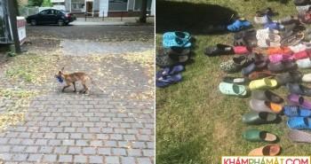 Dân Berlin bất ngờ khi phát hiện danh tính của kẻ trộm giày dép siêu hạng