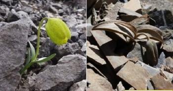 Cây thảo dược ngụy trang để trốn người hái