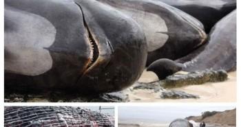 Cái chết của cá voi già mang đến vô vàn lợi ích cho đại dương và hệ sinh thái