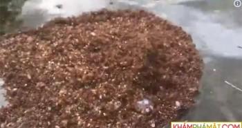 Kinh ngạc đảo kiến lửa khổng lồ trôi nổi trong siêu bão ở Mỹ
