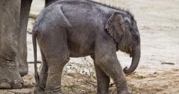 1001 kiểu sinh sản kỳ lạ của động vật