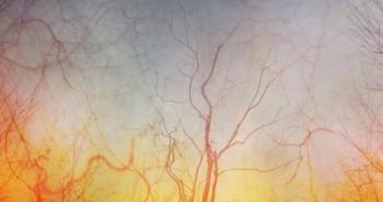 22 hình ảnh cực ấn tượng được chụp qua kính hiển vi