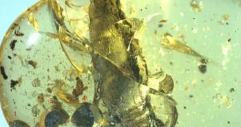 Ốc sên vừa sinh con chết cứngtrong hổ phách 99 triệu năm