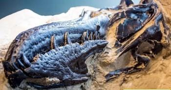 Tìm thấy hóa thạch 67 triệu năm của đôi khủng long chết đè lên nhau