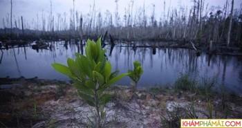 600 loài thực vật biến mất, đe dọa cả sự sinh tồn của con người