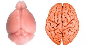 """Vì sao não người lại """"nhăn""""?"""