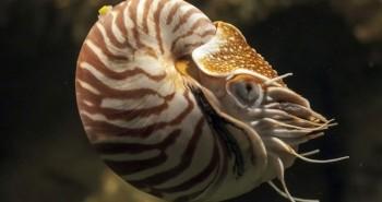 """Những """"hóa thạch sống"""", tồn tại từ hàng triệu năm trước cho đến ngày nay"""