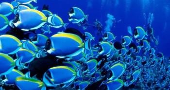 Những sự thật có thể bạn chưa biết về các đại dương