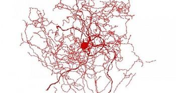 Phát hiện hai cấu trúc chưa từng biết đến trong não người